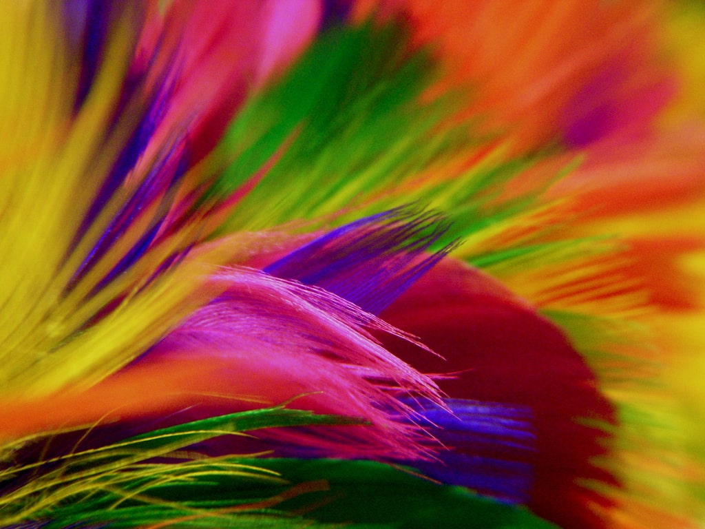 Rainbow Feather Duster
